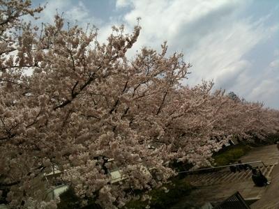 sakura_2011_002.jpg